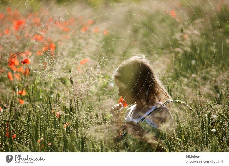 SommerTag Mensch Kind Natur Erholung Mädchen Freude Blume Wiese Spielen Feld Freizeit & Hobby Kindheit Zufriedenheit wandern Ausflug Ewigkeit