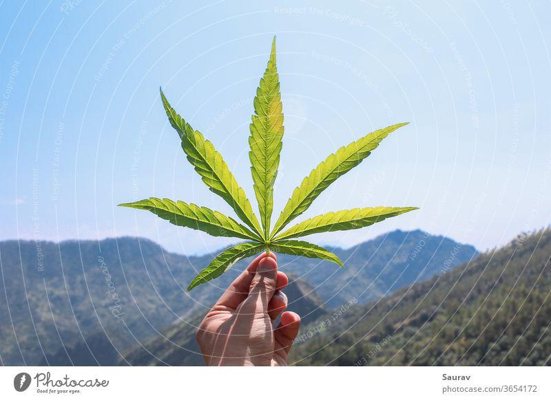 Menschliche Hand hält ein Cannabis-Blatt vor einer wunderschönen Aussicht auf die Berge. Cannabisblatt Medizin Marihuana Unkraut Sommer Medikament Hanf reisen