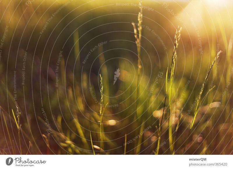 Morning Grass. Natur grün Sommer Sonne ruhig Wiese Wärme Gras natürlich Kunst Idylle Zufriedenheit ästhetisch Grasland sommerlich Blumenwiese