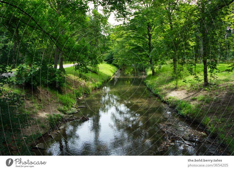 Bach in einem Wald Natur Außenaufnahme Farbfoto Wasser Menschenleer Tag Landschaft Pflanze Baum Fluss grün Flussufer Sommer natürlich ruhig Schönes Wetter