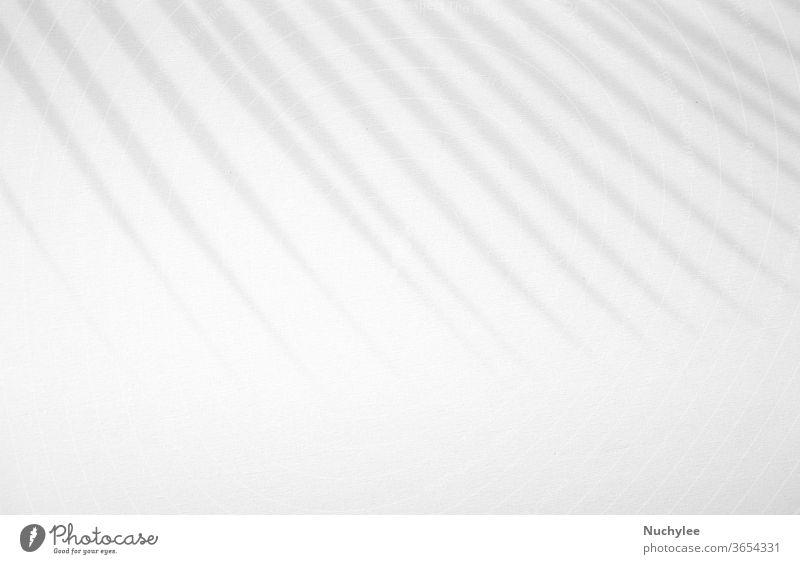 Realistischer und organischer Tropenblatt-Naturschatten-Overlay-Effekt auf weißem Textur-Hintergrund, zur Überlagerung von Produktpräsentation, Hintergrund und Mockup