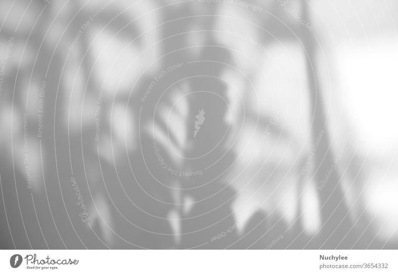 Überlagerung von Naturschatten auf weißem Texturhintergrund, zur Überlagerung von Produktpräsentation, Hintergrund und Mockup, Sommersaisonkonzept abstrakt