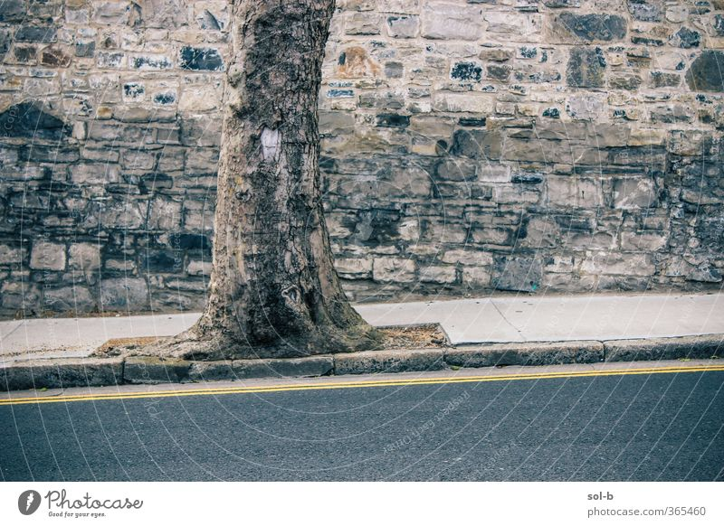 Cnoc Natur Baum Mauer Wand Verkehr Straße alt Sauberkeit grau Baumstamm Wegweiser gelb Linie Hügel Berghang Backstein Backsteinwand Stadt Urbanisierung anlehnen