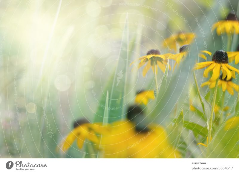 gelbe blumen im sonnenlicht Blüten Blumen Beet Garten Sommer Natur Pflanzen Blütenblätter Gras Außenaufnahme natürlich Wiese Frühling Blumenwiese Blühend