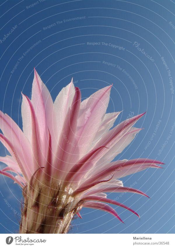 Hoch hinaus Natur Himmel Blume