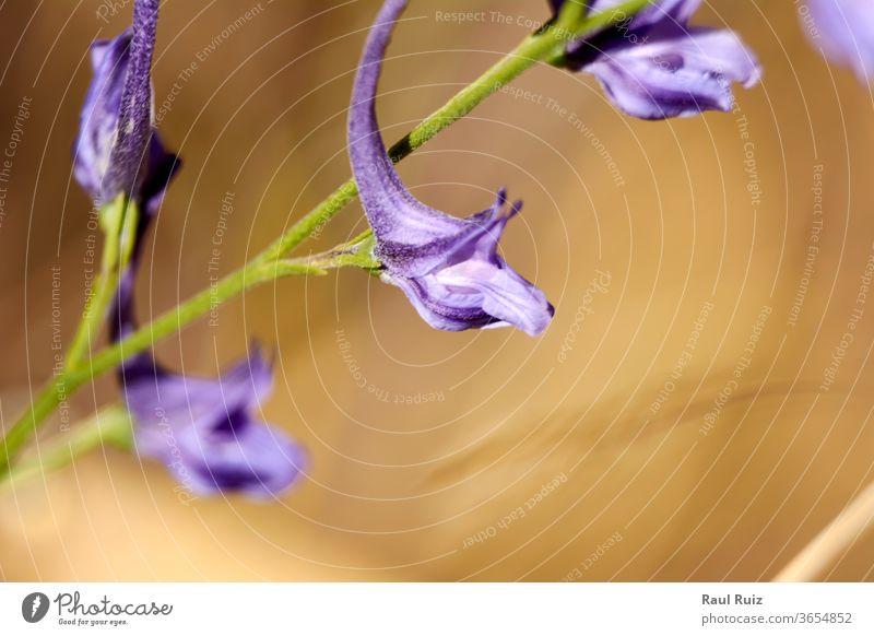 Satz kleiner violetter Blüten ländlich natürlich idyllisch Gänseblümchen Feld Landschaft frisch gelb blau Kraut Sommer Garten Wiese Himmel niemand geblümt