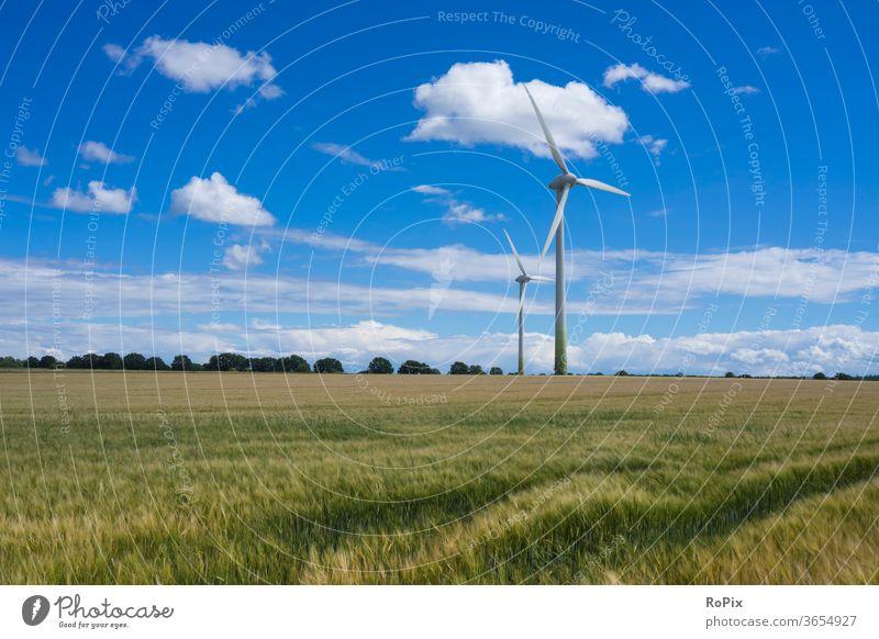 Windmühlen in einem Kornfeld an einem Sommertag. natur kornfeld blume flower landwirtschaft papaver getreide gerste rye acker ackerbau feldblume blüte poppyseed