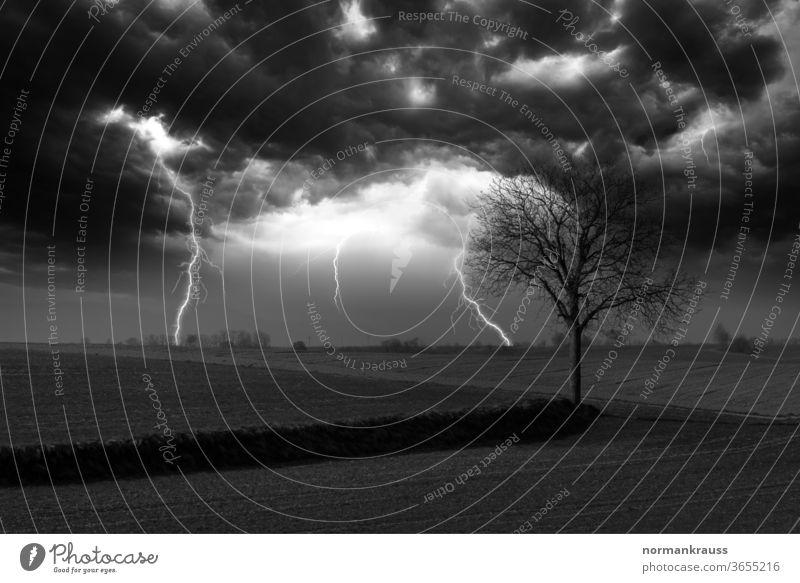 Gewitter in schwarzweiss blitz blitze gewitter einschlag sturm unwetter himmel energie gefahr baum landschaft monochrom wolken gefährlich