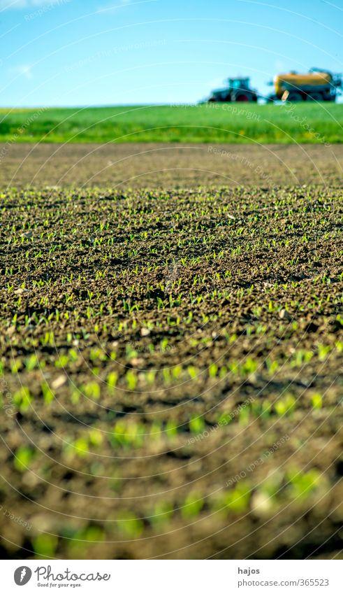 Maisfeld mit Jungpflanzen Lebensmittel Getreide Landwirtschaft Forstwirtschaft Pflanze Frühling Feld Traktor grün Setzling Anbau Reihen Hintergrundbild unscharf