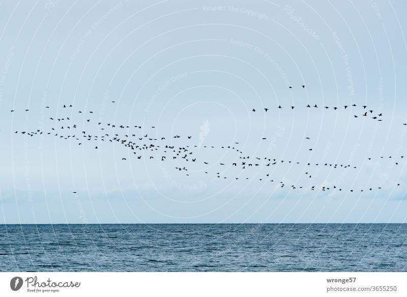 Vogelschwarm über der Ostsee Vögel Schwarm Himmel Blauer Himmel fliegen grenzenlos Horizont Meer Wasser Wellen Außenaufnahme Menschenleer Farbfoto Natur Tag