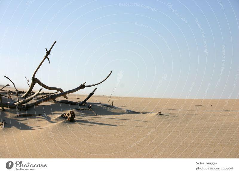 Wüstenstimmung Einsamkeit Tod Holz Wärme Sand Physik
