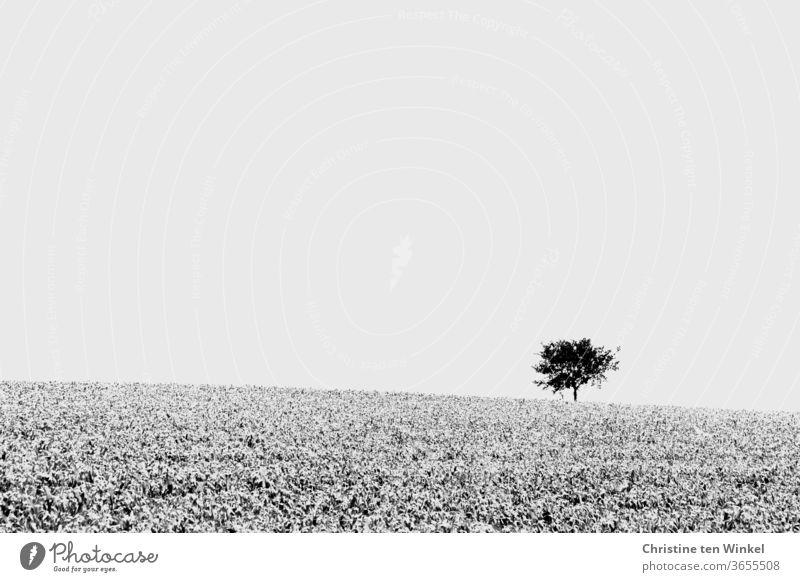 Ein einsamer Baum steht in der Ferne am hellen Horizont, davor erstreckt sich ein Feld. Schwarzweiß, minimalistisch einzelner Baum Schwarzweißfoto