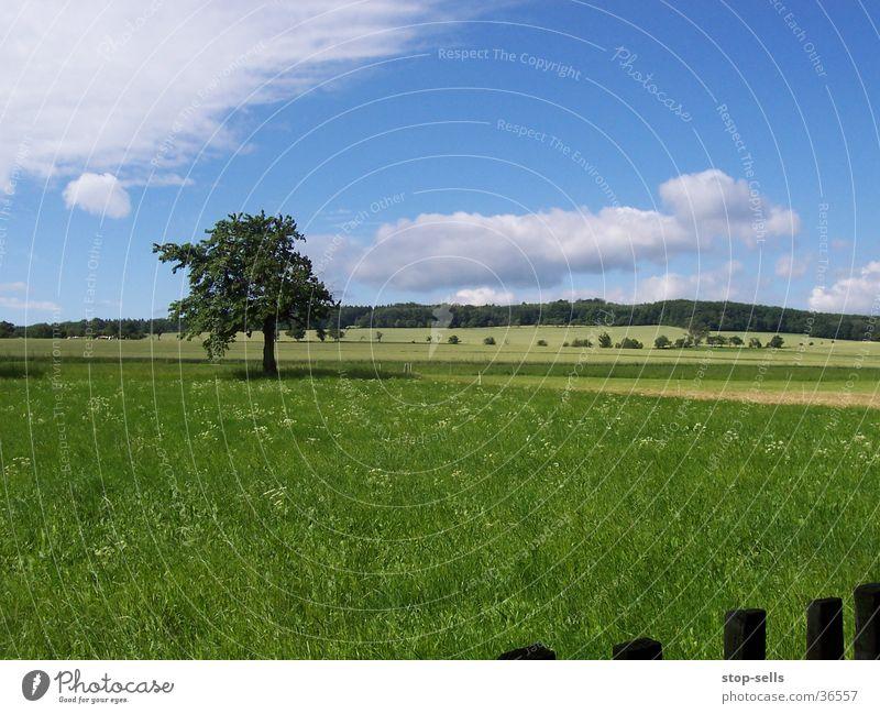 Sommerlangeweile Baum Wiese groß Zaun Blauer Himmel Momentaufnahme Makel