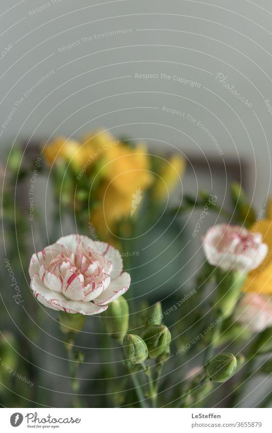 Blüte und Knospen ästhetisch Nahaufnahme Schwache Tiefenschärfe Unschärfe Sonnenlicht Textfreiraum oben Detailaufnahme Gedeckte Farben Farbfoto elegant Duft