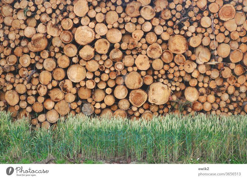 Ruhende Masse Baumstämme Holz viele gestapelt Stapel hoch schwer unterschiedlich Menschenleer Farbfoto Außenaufnahme Tag Detailaufnahme Natur Holzstapel Umwelt