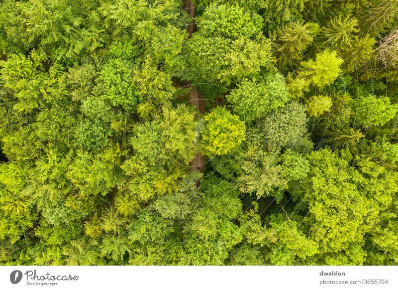 Grüner Waldon von Oben wald drone oben luftbild waldweg waldstrasse Waldweg Natur Farbfoto Außenaufnahme Tag Landschaft grün Baum Umwelt Menschenleer