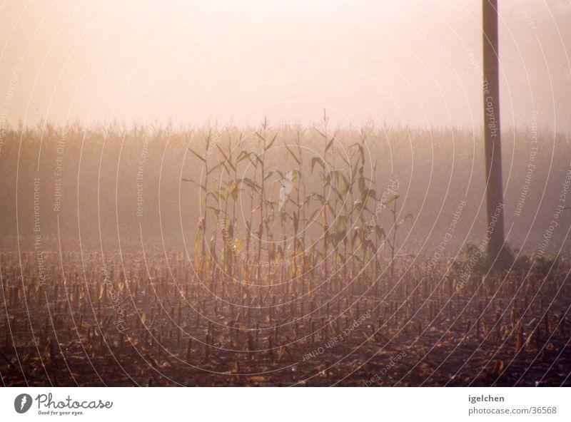 vergessen Natur ruhig Einsamkeit Feld Nebel