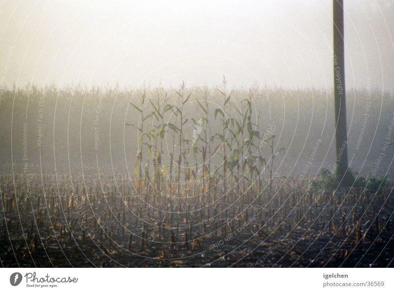 vergessen Natur ruhig Einsamkeit Getreide Mais