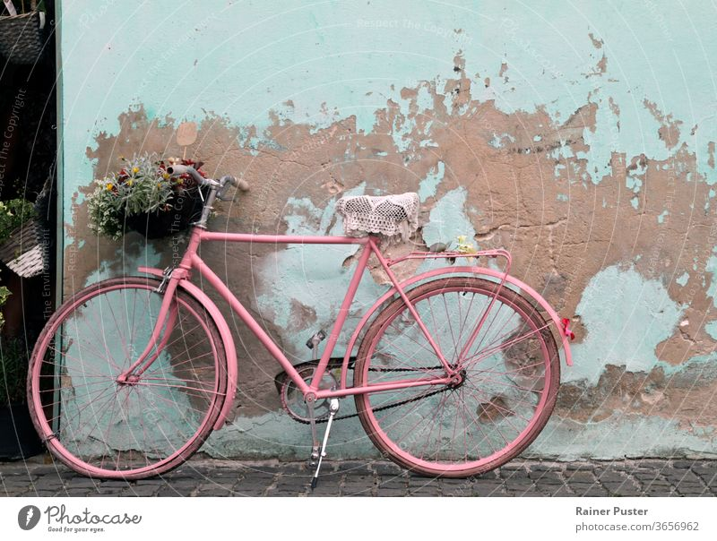 Rosafarbenes, an eine Wand gelehntes altes Fahrrad in Havanna, Kuba Antiquität Architektur klassisch Zyklus Grunge im Freien retro Straße rostig Sommer Verkehr