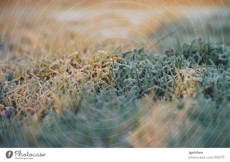 einfach gras ruhig Gras Gelassenheit
