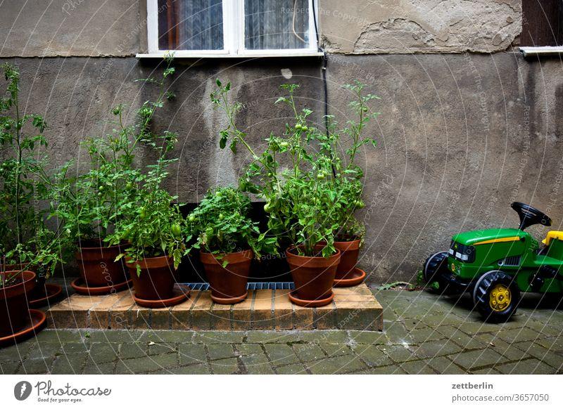 Tomatenplantage mit schwerer Technik tomate tomatenpflanze altbau traktor außen fassade fenster ferien garten haus hinterhaus hinterhof innenhof innenstadt