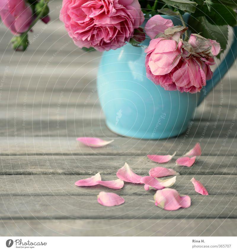 Vergehen Sommer Rose Blühend verblüht blau rosa Schmerz Trauer Traurigkeit Vergänglichkeit Stillleben Vase Gartentisch Rosenblätter Farbfoto Außenaufnahme