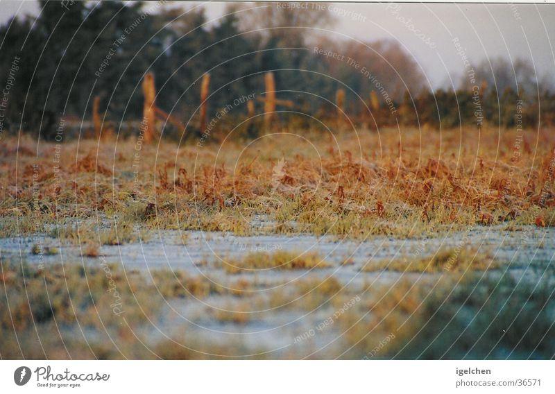 aufgetaut Einsamkeit Ferne Herbst Wiese nass Gelassenheit