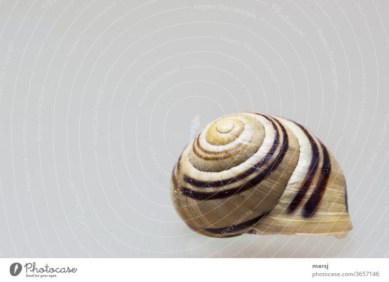 Scheinbar schwebendes Schneckenhäuschen mit Ralleystreifen auf dem Dach Schneckenhaus Freisteller Spirale Schutz Hintergrund neutral Muster Strukturen & Formen