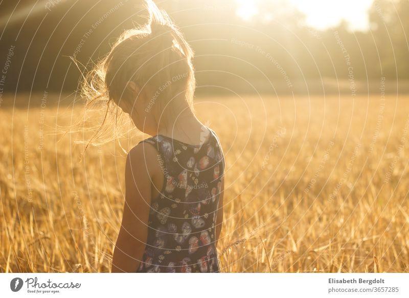 Kleines Mädchen steht im Weizenfeld, bei untergehenden Sonne, mit Blick nach unten Kleinkind Kind Sonnenstrahlen Sonnenuntergang Sommer Träumen traurig
