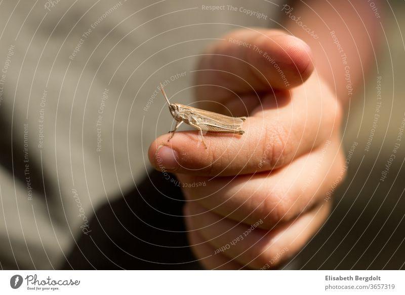 kleiner Junge mit einer kleinen Heuschrecke auf dem Finger Hand Kind Natur Tiere Sommer