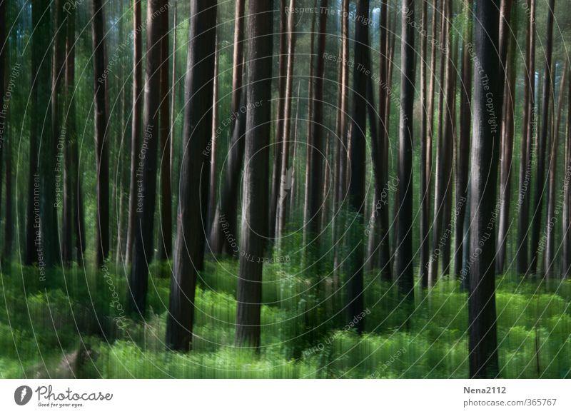 ... feel more. Natur grün Sommer Pflanze Baum Landschaft schwarz Wald Umwelt Frühling Holz Erde authentisch Schönes Wetter bedrohlich viele