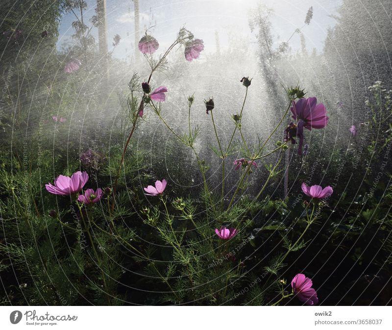Nasser Garten Wasser Wassertropfen Dusche gießen Regen nass feucht Pflanze grün Frühling Nahaufnahme Blume Außenaufnahme geheimnisvoll Makroaufnahme Totale