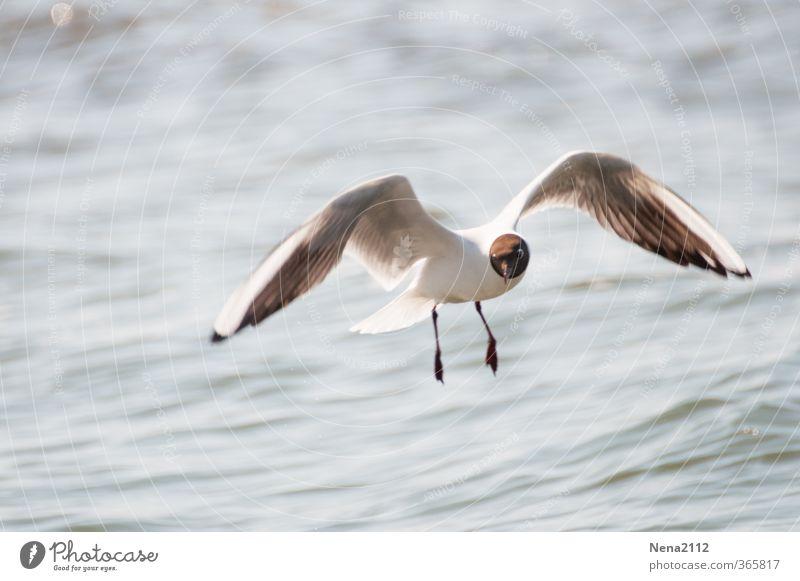 Lust aufs Meer Umwelt Natur Tier Wasser Schönes Wetter Wind Küste Seeufer Nordsee Ostsee Vogel Tiergesicht Flügel fliegen ästhetisch frei weiß Freude friedlich