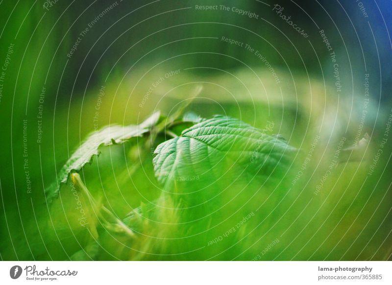 verborgen Natur Pflanze Sträucher Blatt Grünpflanze Wald grün Hintergrundbild Farbfoto Außenaufnahme Detailaufnahme Textfreiraum oben Textfreiraum unten