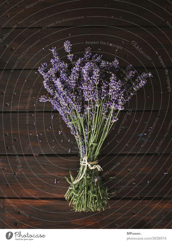 ein bund lavendel Lavendel Strauß Blumenstrauß Pflanze riechen Duft Provence holztisch lila Ernte violett Blüte Nahaufnahme Blühend