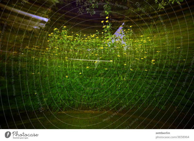 Sonnenhut abend rudbeckia sonnenhut blitzlicht blume blühen blüte dunkel erholung ferien garten kleingarten kleingartenkolonie menschenleer natur pflanze ruhe