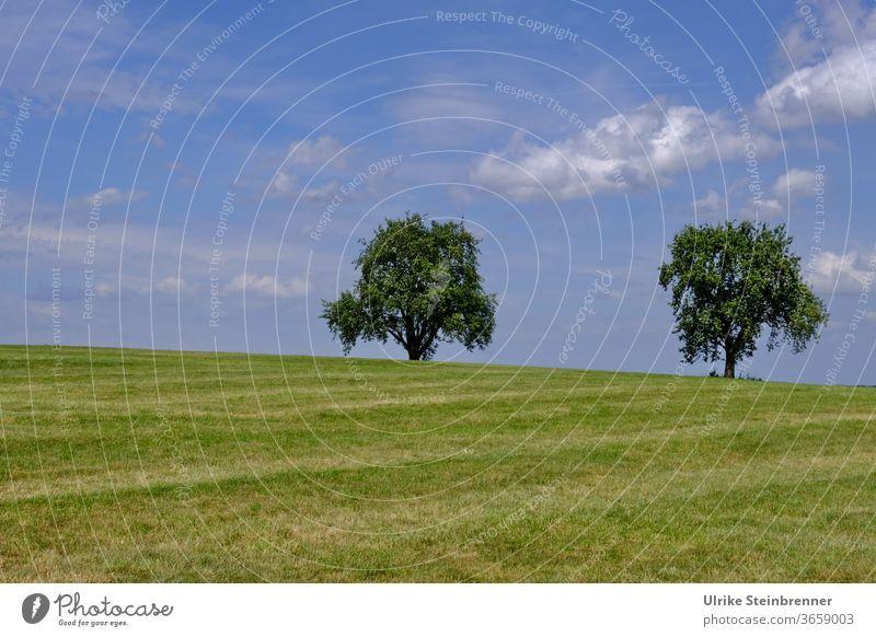 Zwei alleinstehende Bäume auf grüner Wiese unter blauem Himmel Obstbaum zwei Hügel paarweise Gras Feld Baumfeld Sommer Landschaft Natur Wolken Schönes Wetter