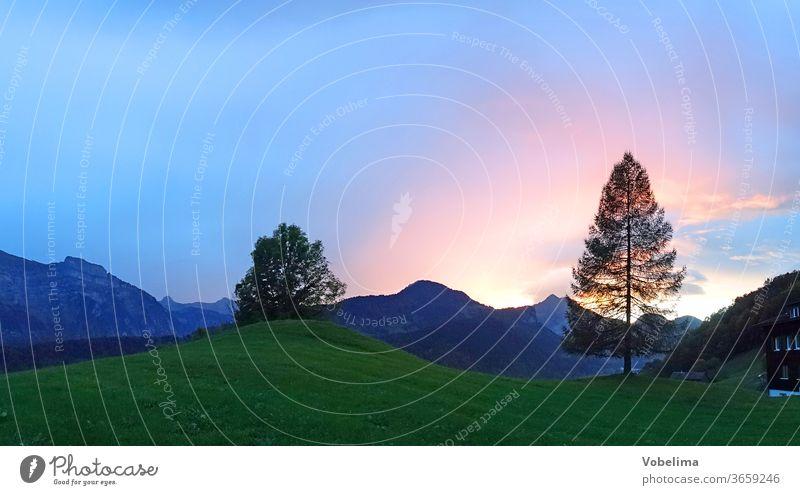 Abend bei Bizau in Vorarlberg Gegenlicht Lärche alpen baum bezau bregenzerwald bregenzerwaldgebirge europa himmel landschaft oesterreich sonne sonnenlicht