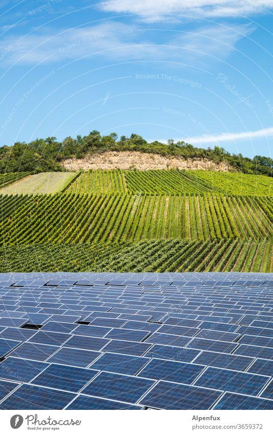 in vino elektricitas Weinberg Photovoltaik Solarzelle Weintrauben Menschenleer Weinbau Nutzpflanze Weingut Natur Alternative Energie grüne energie Solarzellen