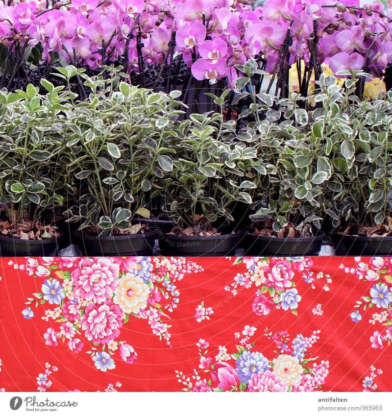Blumiger wird's nicht Natur grün Sommer Pflanze rot Blume Blatt Frühling Blüte Zufriedenheit authentisch Fröhlichkeit verrückt Dekoration & Verzierung
