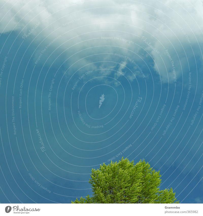 Einmal nur die Spitzen, bitte Urelemente Himmel Wolken Gewitterwolken Sommer Wetter schlechtes Wetter Baum blau grün Farbfoto Außenaufnahme Textfreiraum Mitte