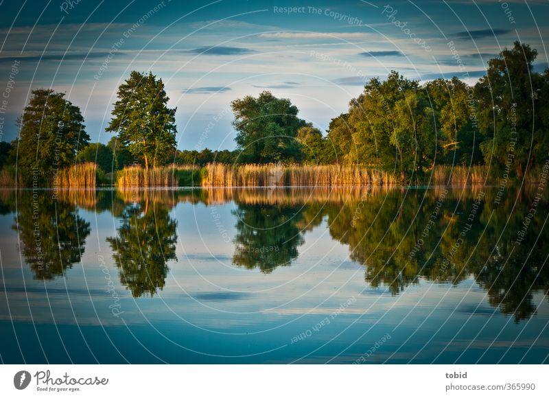 Reflektionen Natur Landschaft Wasser Sonnenaufgang Sonnenuntergang Sonnenlicht Teich Stimmung Freiheit Wasseroberfläche Reflexion & Spiegelung Farbfoto