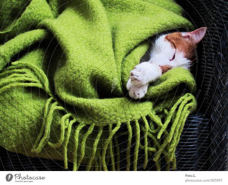 kuscheln Tier Haustier Katze 1 schlafen träumen Kitsch niedlich Wärme grün Vertrauen Sicherheit Schutz Müdigkeit Fürsorge Wolldecke Hauskatze Korbsessel Pfote
