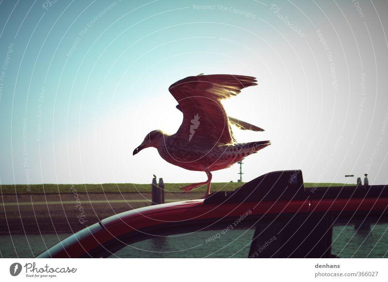 nur fliegen ist schöner Ferien & Urlaub & Reisen Meer Wolkenloser Himmel Nordsee Deich Verkehrsmittel Autofahren PKW Vogel Flügel Möwe 1 Tier stehen frech oben