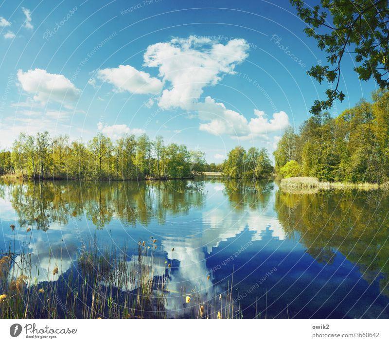 Übern großen Teich See Idylle Panorama (Aussicht) Pflanze Wasser Himmel Reflexion & Spiegelung Landschaft Natur windstill Außenaufnahme Menschenleer Farbfoto
