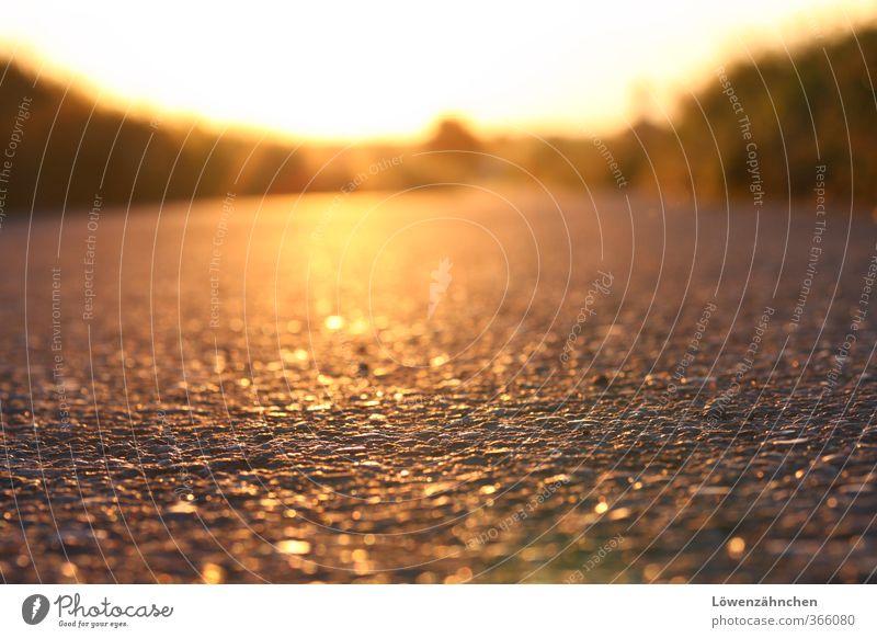 golden road to happiness Sommer Schönes Wetter Wärme Gras Feld Straße Wege & Pfade Fußweg leuchten glänzend hell gelb Stimmung Zufriedenheit Warmherzigkeit