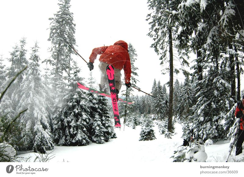 ski#3 Pulverschnee springen Skifahrer Wald Baum Skifahren Extremsport Schnee air