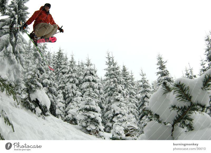 ski#2 Pulverschnee springen Skifahrer Wald Baum Skifahren Extremsport Schnee air