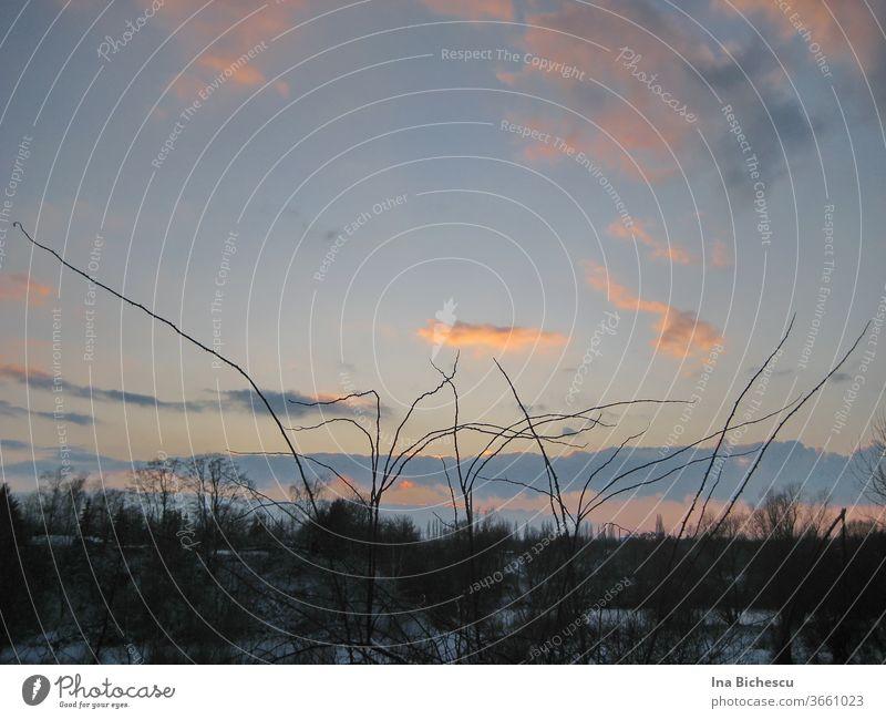 Eine Winter Landschaft in Sonnenuntergang. Auf dem blaue Himmel mit den bunten Wolken zeichnen stachelige Stängel eine dunkle Zeichnung. In unteren Teil des Bildes sieht man Schnee und dunkele Bäume ohne Laub.