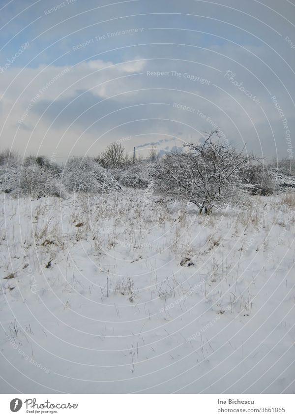 Eine Winterlandschaft in helle Töne mit wenige dunkle Farben. Der Boden, der Baum, die Sträucher in der Ferne sind mit Schnee bedeckt, auf dem Himmel hängen weiße und hell graue Wolken, aus dem Schnee ragen helle, dünne und trockene Pflanzen Stängel raus.
